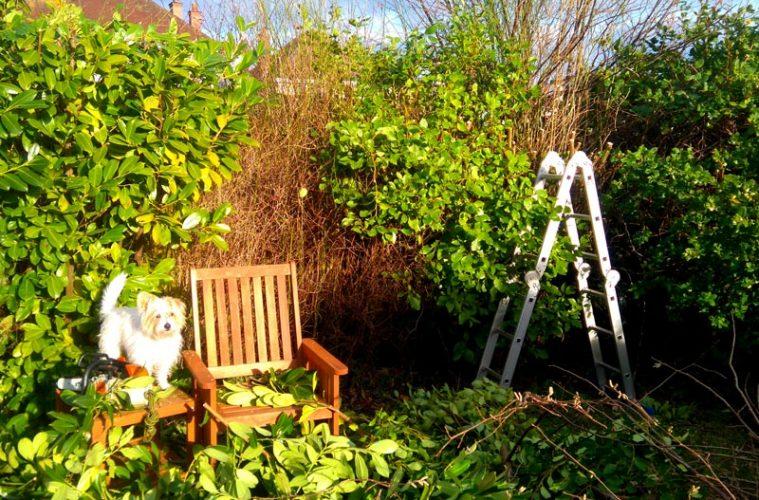 Bark And Gardens   The Bristol Magazine Online